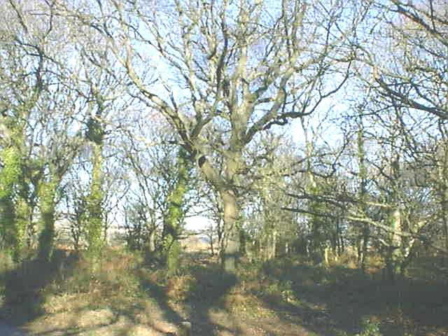 Hengistbury Head Forest