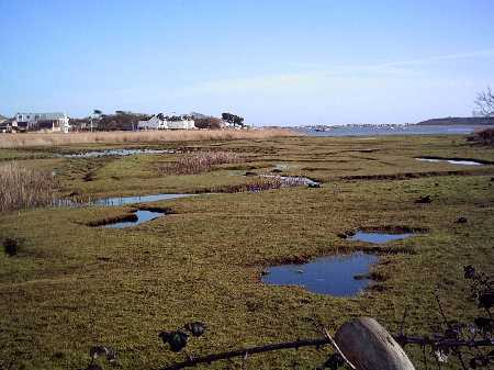 Near the car park, looking east towards Mudeford Creek and Strides Boatyard